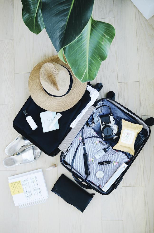 maleta_planta